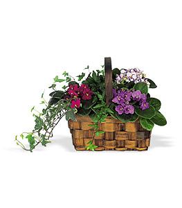 Violettes en panier