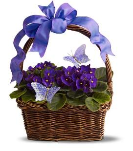 African Violet &...